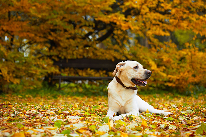 Fun things to do with your dog during Fall